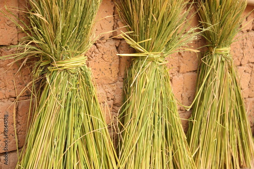 Rice Straw Uses Rice Straw Stock Photo And