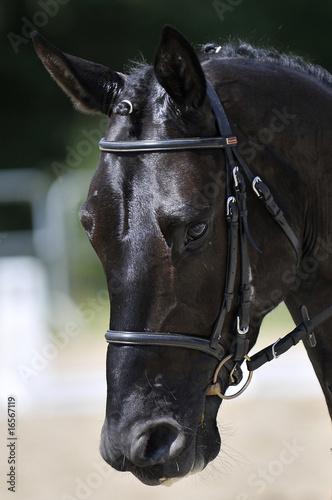 tête de cheval 1