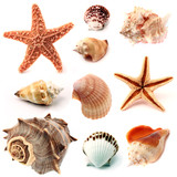 Fototapety seashells and starfish set