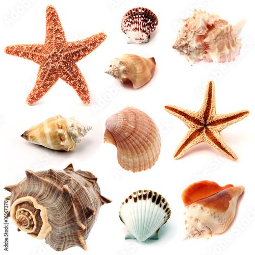 Poster seashells and starfish set
