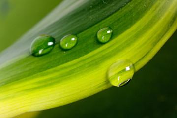 Grünes Blatt in der freien Natur,Makro-mit Tropfen