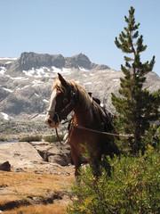 Horse near thousand islands lake