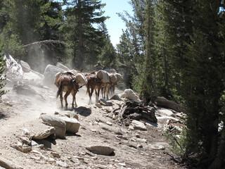 Hikers resupply caravan