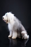 Fluffi Dogs poster