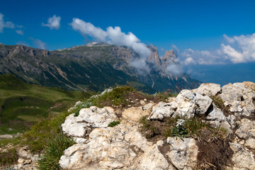 Edelweiß Seiser Alm in Südtirol