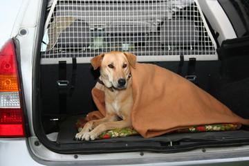 Nina im Kofferraum