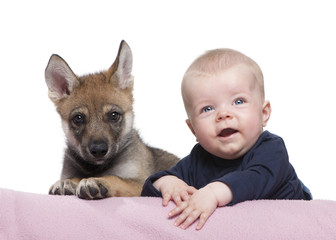Portrait of baby boy with Young European wolf, studio shot