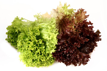 lactuca sativa lettuce_green and red