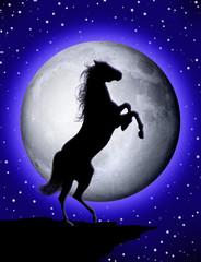 Cavallo Selvaggio-Wild Horse-Cheval sauvage