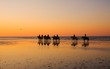 Fototapeten,spaziergang,pferd,sonne,abendsonne