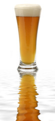 Glass of Beer with reflection