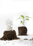 Energy Efficient Light Bulb & Small Green Plant Sprout from Soil poster