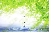 Fototapety 新緑と水滴