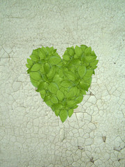 Green plant heart