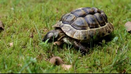 Turtle on Grasss