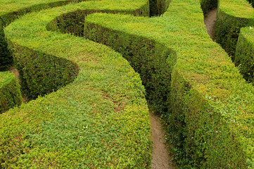 maze hedges leading to nowhere