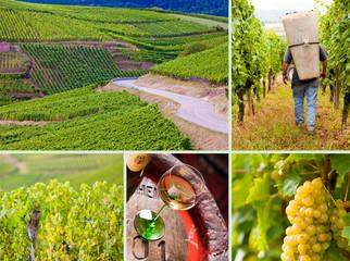 Vendanges et concept vin