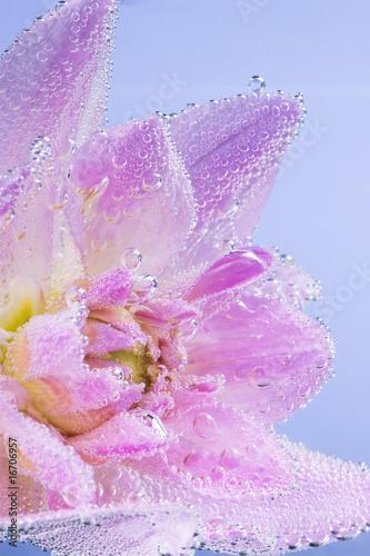 rozowy-kwiat-z-babelkami-powietrza
