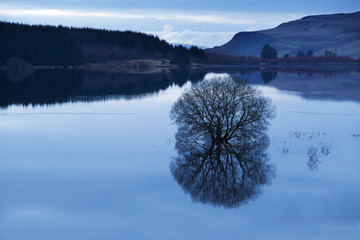 reservoir tree
