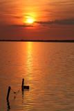 Fototapeta słońce - woda - Zachód / Wschód Słońca