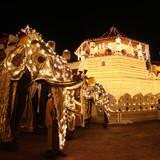 Esala perahera - Kandy