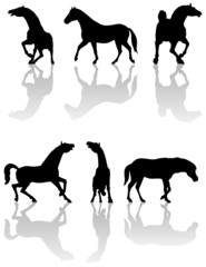 Illustration of horses silhouettes