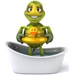 Fototapety Tortue dans son bain