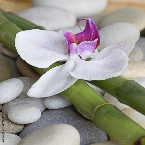 Leinwandbild Motiv Orchidee auf Bambus