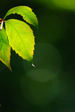 Green leaf and bokeh poster