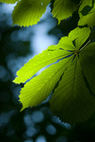 Green leaf in mystic light poster