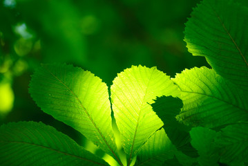 Green leaf in mystic light