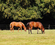 Grazing Bay Horses