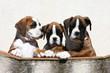 trio de copains boxer en studio côte à côte