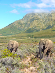 elephants in the nature