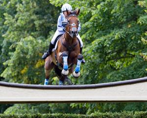 Horse & Rider in Blue