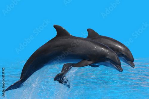 Foto op Canvas Dolfijnen Delfin