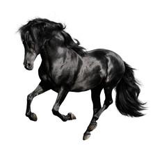 Czarny koń biegnie galopem na białym backgrond