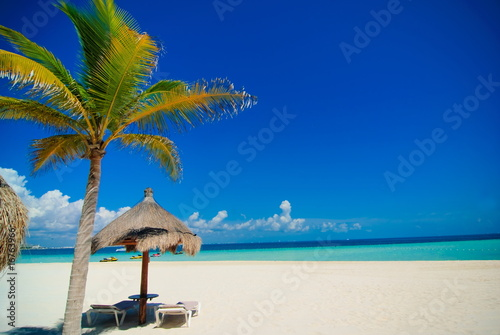 In de dag Water planten Cancun beach