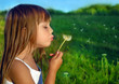 Little girl blowing dandelion on a meadow