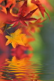 Fototapety Herbstlaub