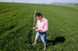 Farmer examining young wheat crop