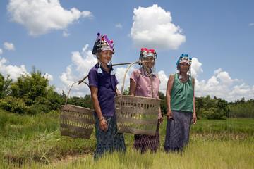 Asiatische Frauen am Reisfeld, Akha