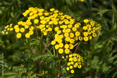 gelbe wildblumen stockfotos und lizenzfreie bilder auf. Black Bedroom Furniture Sets. Home Design Ideas