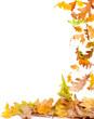 Autumn Oak Leaves Frame