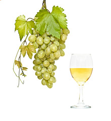 Goblet with wine and grapevine isolated on white background