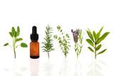 Fototapety Healthy Herbs