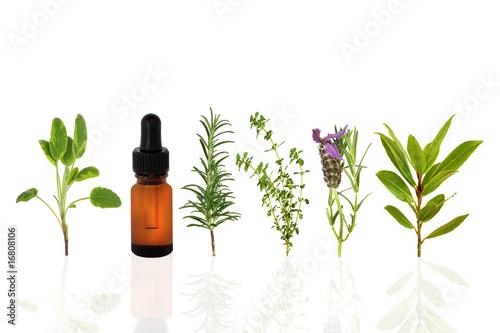 Fototapeta Healthy Herbs