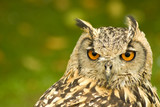 head portrait of a bengal eagle owl poster