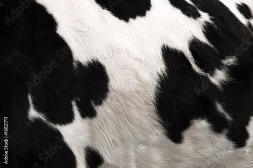 Cow hide print
