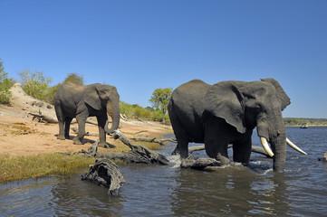 Un bagno nel fiume Chobe